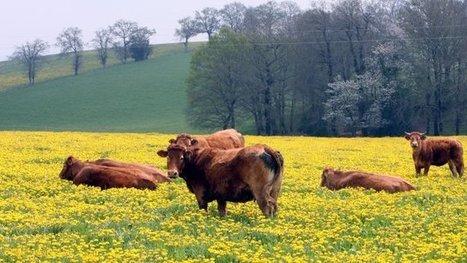 Vers la fusion des trois chambres régionales d'agriculture – Grande Région - France 3 Limousin | Agriculture en Dordogne | Scoop.it