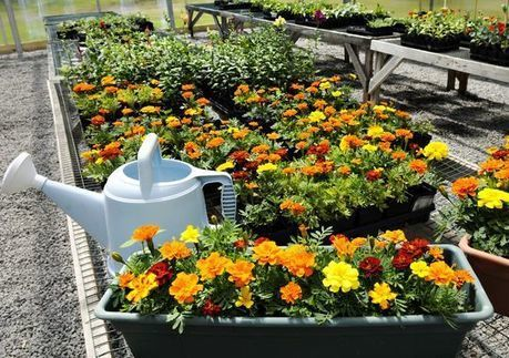 Children's Home greenhouse teaches more than gardening | School Gardening Resources | Scoop.it