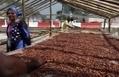 Vers une pénurie mondiale de cacao d'ici 2020 ? | Questions de développement ... | Scoop.it
