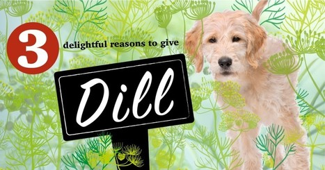 3 Handy Health Benefits of Dill for Your Dog   Animal Empathy & Natural Pet Care   Scoop.it