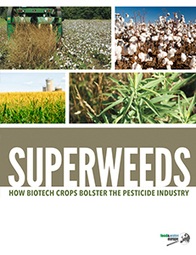 EU Version - Superweeds: How Biotech Crops Bolster the Pesticide Industry   Food & Water Watch   Reports on Agriculture   Scoop.it