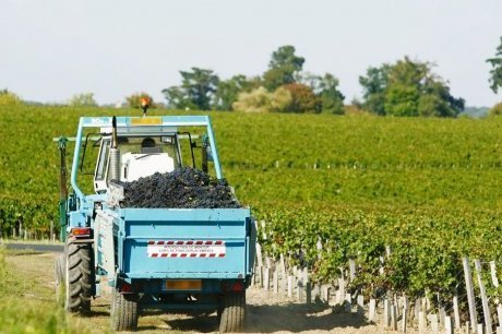 Alerte rouge au volant pendant les vendanges | Agriculture en Gironde | Scoop.it