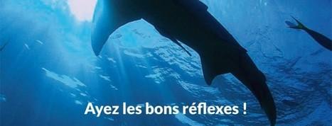 Brochure de Recommandations des conduites à tenir en présence de requins en plongée SMF Version Française | Sharks Mission France : sauver les requins | Dans mon sac de plouf | Scoop.it