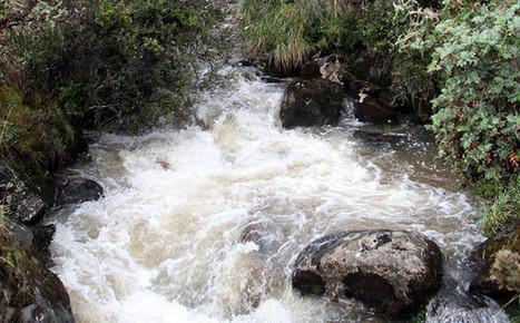 50 % de páramos está en Colombia   Educación ambiental para la protección de páramos   Scoop.it