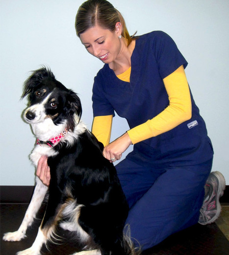 Animal Chiropractic: an Alternative Treatment for Neurological Conditions   Animal Chiropractic   Scoop.it