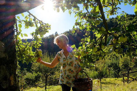 Italian Grows Forgotten Fruit. What She Preserves Is a Culture. | Gaia Diary | Scoop.it