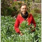 Ateliers de horta biologica gratuitos - Transição e Permacultura Portugal | Cidadania | Scoop.it