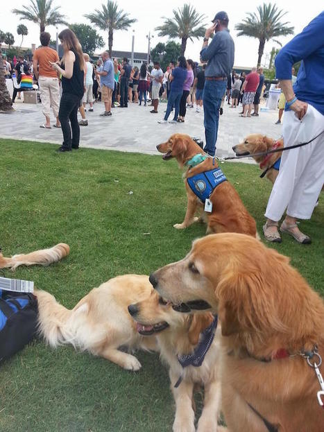 Comfort Dogs Are Flown Into Orlando to Help Survivors Cope | Le It e Amo ✪ | Scoop.it