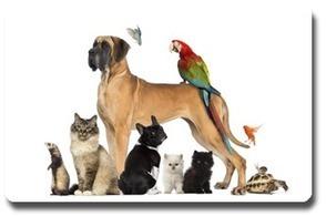 La meilleure alimentation pour vos animaux , faites le bon choix pour leur santé - letoiledesbergers.com   Chiens et chats - comportement, santé et diététique   Scoop.it