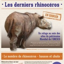 Les derniers rhinocéros | Visual.ly | French Class | Scoop.it