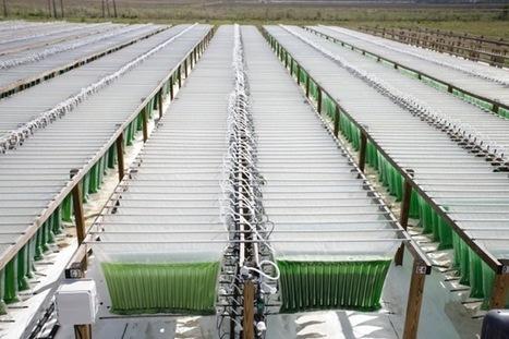 Algenol's Next Generation Biofuel   Algal Biofuels   Scoop.it