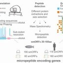 Some long non-coding RNAs are conventional after all - BioScholar News | Bio Sciences | Scoop.it