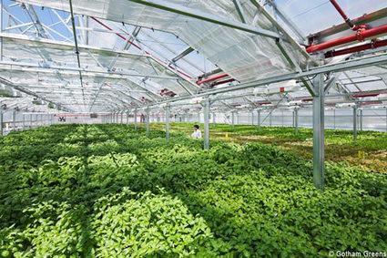 La plus grande serre sur toit au monde va ouvrir à Chicago   Courant Positif   Agriculture urbaine, architecture et urbanisme durable   Scoop.it