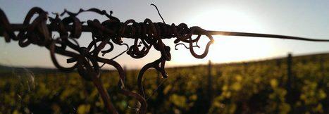 La finesse des bulles du Champagne, une histoire d'âge ou de verre ? | Winemak-in | Scoop.it