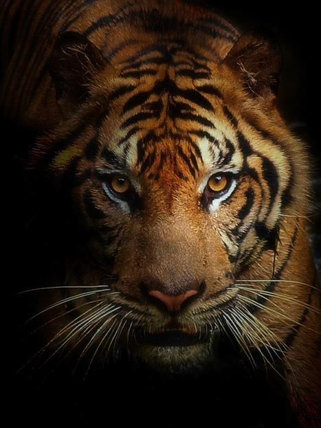 30 Stunning Examples of Animal Photography by Irawan Subingar | Everything Photographic | Scoop.it