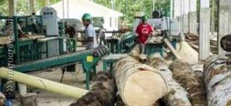 Reforestación sería viable, si controlan la tala ilegal en Santander   Opinión   Scoop.it