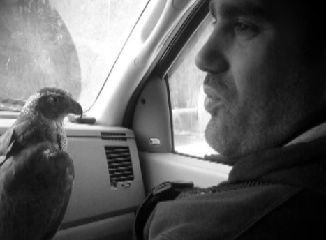 VIDEO: Giulio Ricci, falconers, laud their sport | Ryerson Journalism: JRN112 Top Content | Scoop.it