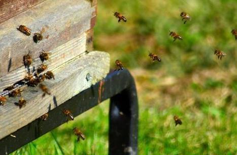 Est-ce vraiment utile d'installer des ruches en ville? | Economie Responsable et Consommation Collaborative | Scoop.it