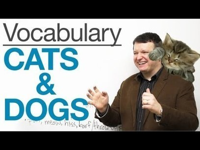 English Vocabulary – CATS & DOGS · engVid | Teaching English at school | Scoop.it