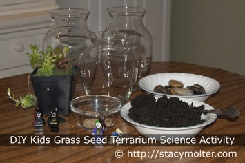 DIY Kids Grass Seed Terrarium Science Activity - Stacy Molter | Container Gardening | Scoop.it