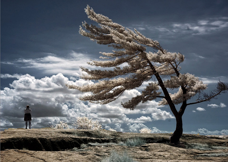Surreal (But Real!) Infrared Photography | as it is | Scoop.it