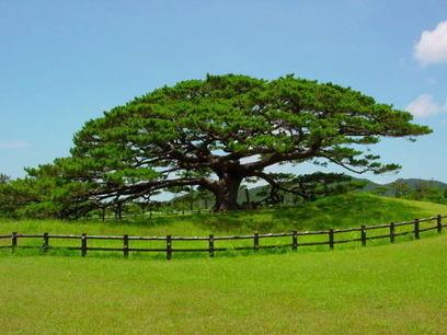 Arboles : Los árboles y nuestro planeta, una convivencia rota | biodiversidad | Scoop.it