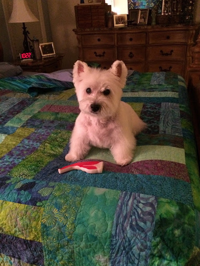 Sew & Tell   West Highland White Terrier   Scoop.it