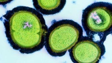 PM warns of antibiotic resistance | vibativ | Scoop.it