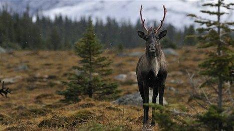 La sixième grande extinction animale est commencée, selon une étude | Archivance - Miscellanées | Scoop.it