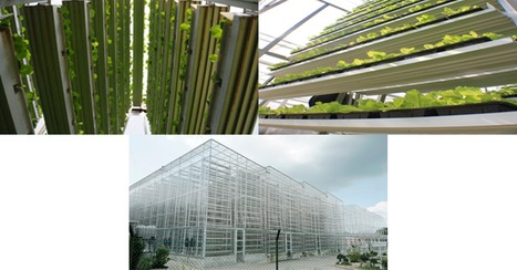 Sky Greens: Vertical Farming | Aquascaping and Nature | Scoop.it