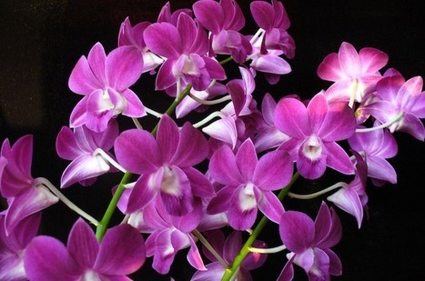 Chinese orchids are in trouble, here's how to save them | Conservation | GarryRogers Biosphere News | Scoop.it