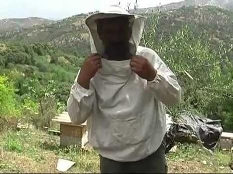 Tizi-Ouzou : Projet de sélection d'une souche d'abeilles locales ... - La Dépêche de Kabylie | Abeilles, intoxications et informations | Scoop.it