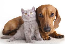 The best veterinarians - Delco Veterinary Hospital in Sharon Hill, PA. | Delco Veterinary Hospital | Scoop.it