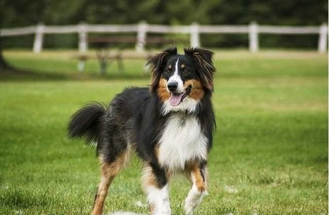 Top 21 Must-Know Dog Training Tips - Top Dog Tips | Dog Lovers | Scoop.it