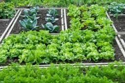 Winter In The Vegetable Garden: No Season For Discontent | Best Home and Garden | Scoop.it