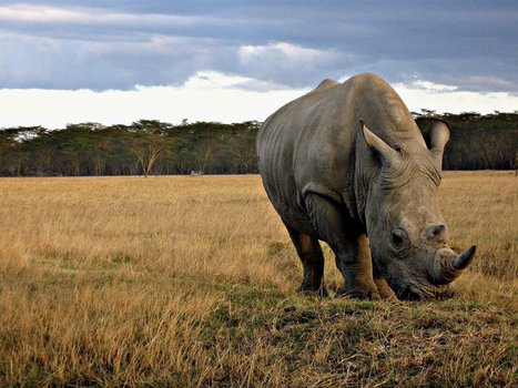 The Big 5 and Other Amazing Animals of South Africa | HotelCluster.com Blog | HotelCluster | Scoop.it