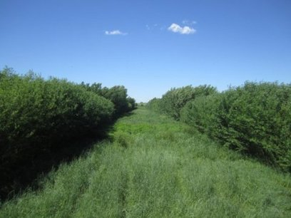 Agroforestry Helps Farmers Branch Out: Balance of Biomass Trees, Crops Brings Potential Win | Permaculture: Organic Gardening, Homesteading, Bio-Remediation | Scoop.it