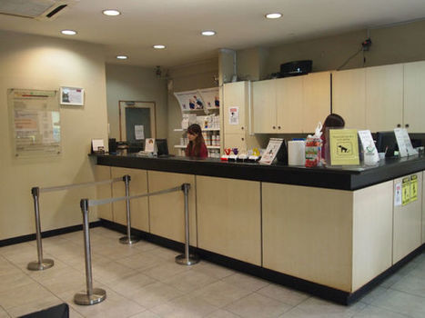 How to Find the Best Animal Clinic in Singapore   Mount Pleasant Vet   Scoop.it