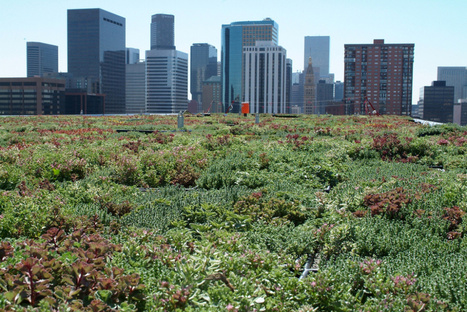 Green roofs don't work unless you plant them with diverse, local plants - Grist | Vertical Farm - Food Factory | Scoop.it