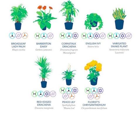 Infographic: 18 Houseplants That Naturally Purify The Air You Breathe - DesignTAXI.com   Chronique d'un pays où il ne se passe rien... ou presque !   Scoop.it