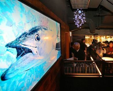 JAPAN: Restaurant featuring 'Kindai' farmed bluefin tuna opens in Tokyo | Aquaculture and Fisheries World Briefing | Scoop.it