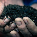 British Gardeners Battle Over Peat, for Bogs' Sake | Bogs and their Surrounding Biomes | Scoop.it
