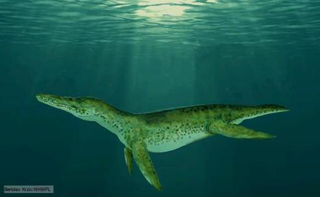 BBC Nature - Pliosaurs videos, news and facts | Dinosaur gallery at New Walk | Scoop.it
