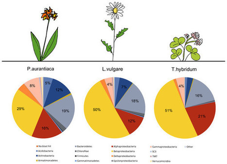 Peer J: Wild plant species growing closely connected in a subalpine meadow host distinct root-associated bacterial communities | Plant microbiome studies | Scoop.it