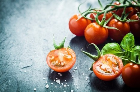GM Tomatoes Contain 50 Red Wine Bottles' Worth Of Resveratrol | Health & Medicine | Scoop.it