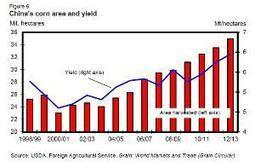 China corn production boosts 2012/2013 output | MAIZE | Scoop.it