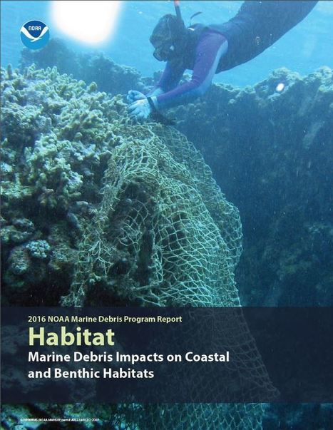 Marine Debris Impacts on Coastal and Benthic Habitats: A New MDP Report | Marine Litter | Scoop.it