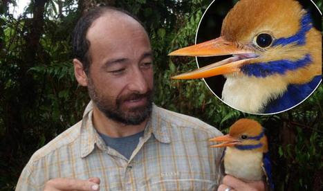 HONTEUX: L'oiseau rare des Îles Salomon a été tué… par son découvreur | Lorraine | Scoop.it