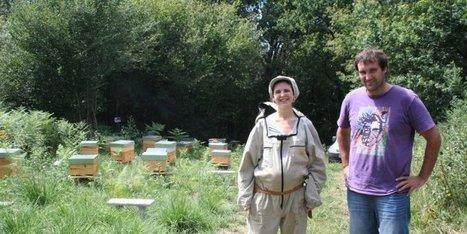 La renaissance de l'abeille basque - SudOuest.fr - Sud Ouest | abeille noire | Scoop.it