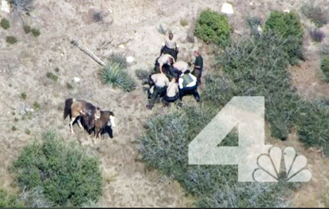 Man beaten by deputies after horse chase gets $650k   Police Problems and Policy   Scoop.it